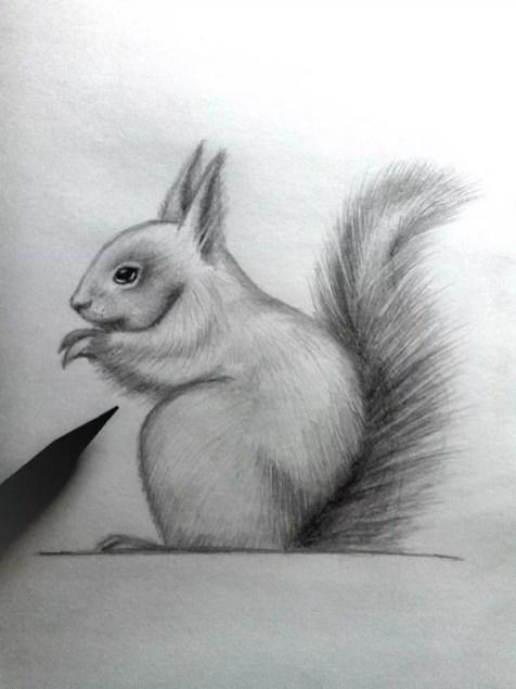 Как нарисовать белку карандашом? Шаг 14. Портреты карандашом - Fenlin.ru