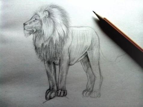 Как нарисовать льва карандашом? Шаг 10. Портреты карандашом - Fenlin.ru