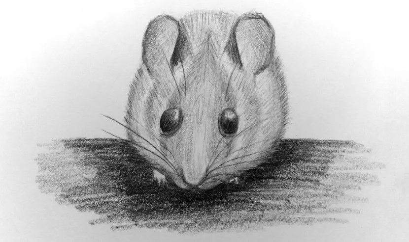 Как нарисовать мышку карандашом? Портреты карандашом - Fenlin.ru