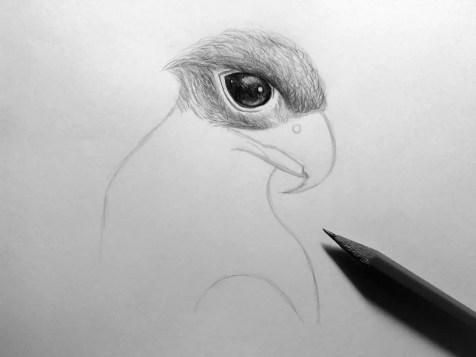 Как нарисовать орла карандашом? Шаг 11. Портреты карандашом - Fenlin.ru