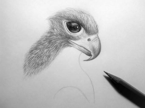 Как нарисовать орла карандашом? Шаг 14. Портреты карандашом - Fenlin.ru