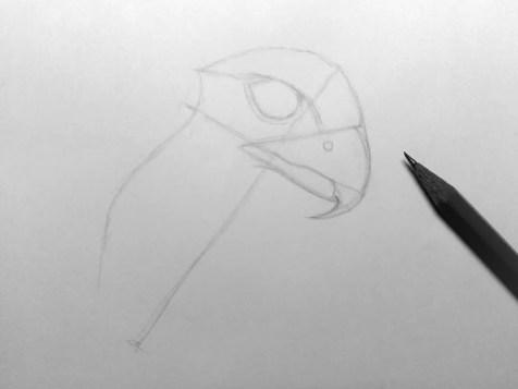 Как нарисовать орла карандашом? Шаг 5. Портреты карандашом - Fenlin.ru