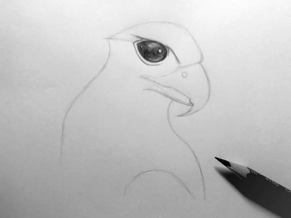 Как нарисовать орла карандашом? Шаг 9. Портреты карандашом - Fenlin.ru