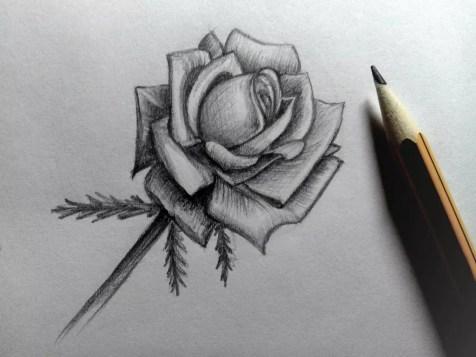 Как нарисовать розу карандашом? Шаг 18. Портреты карандашом - Fenlin.ru
