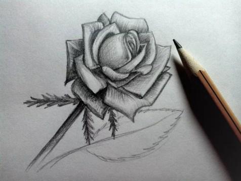 Как нарисовать розу карандашом? Шаг 19. Портреты карандашом - Fenlin.ru