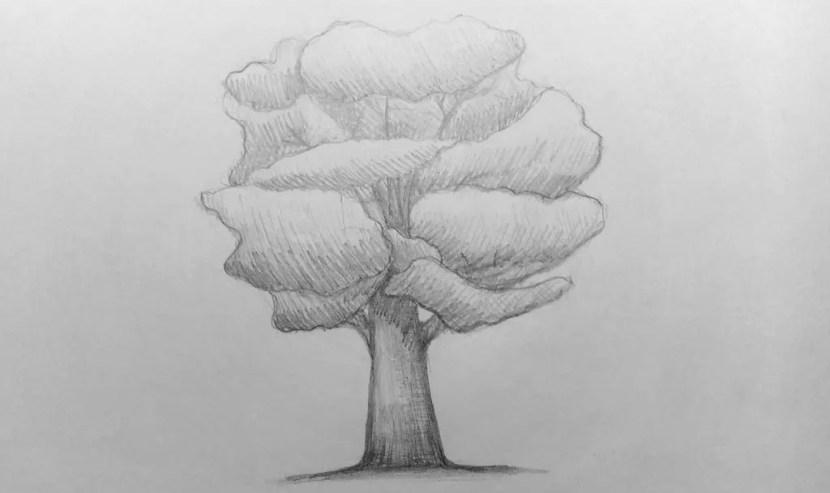 Как нарисовать дерево карандашом? Поэтапный урок. Портреты карандашом - Fenlin.ru