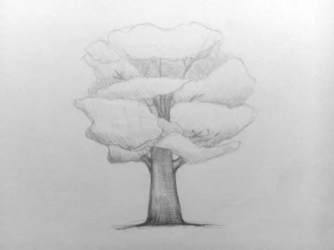 Как нарисовать дерево карандашом? Поэтапный урок. Шаг 8. Портреты карандашом - Fenlin.ru