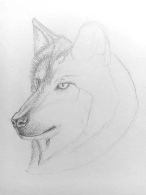 Как нарисовать волка карандашом? Поэтапный урок. Шаг 11. Портреты карандашом - Fenlin.ru