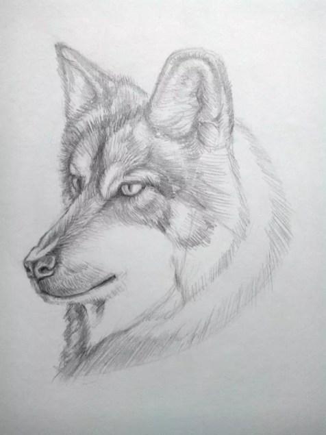 Как нарисовать волка карандашом? Поэтапный урок. Шаг 16. Портреты карандашом - Fenlin.ru