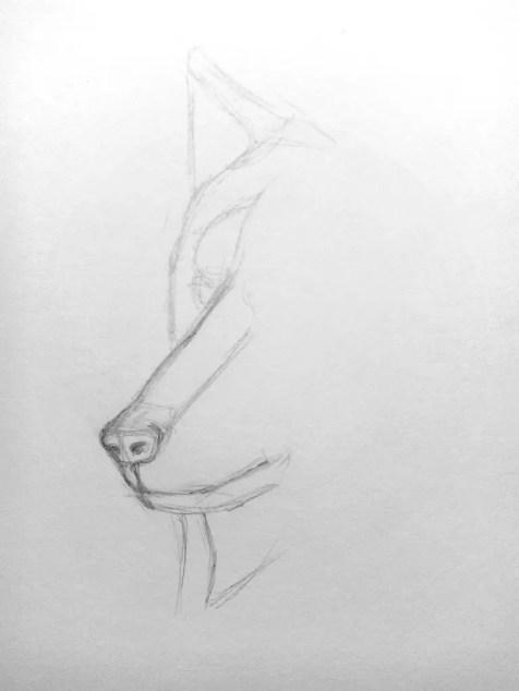 Как нарисовать волка карандашом? Поэтапный урок. Шаг 4. Портреты карандашом - Fenlin.ru