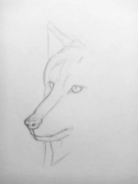 Как нарисовать волка карандашом? Поэтапный урок. Шаг 5. Портреты карандашом - Fenlin.ru