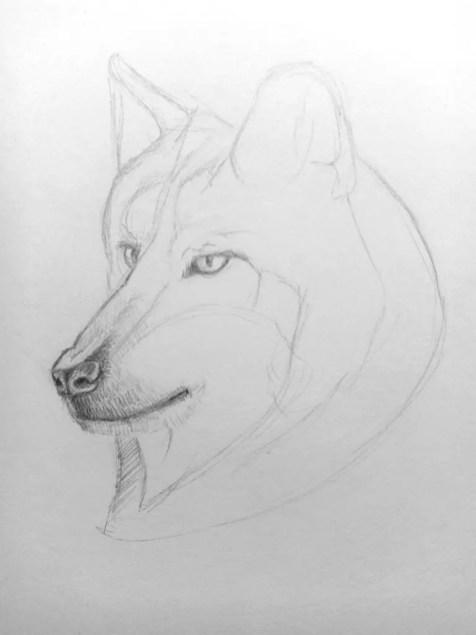 Как нарисовать волка карандашом? Поэтапный урок. Шаг 9. Портреты карандашом - Fenlin.ru
