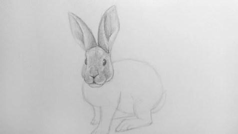 Как нарисовать кролика карандашом? Шаг 13. Портреты карандашом - Fenlin.ru