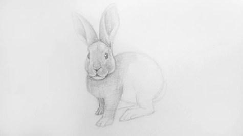 Как нарисовать кролика карандашом? Шаг 15. Портреты карандашом - Fenlin.ru