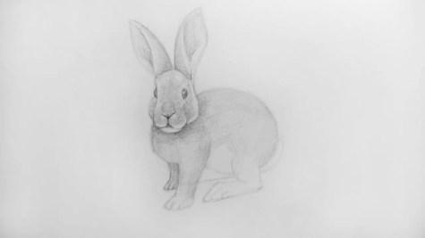 Как нарисовать кролика карандашом? Шаг 16. Портреты карандашом - Fenlin.ru