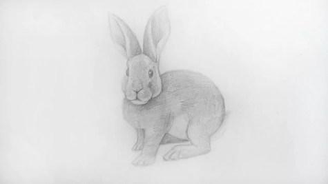 Как нарисовать кролика карандашом? Шаг 18. Портреты карандашом - Fenlin.ru