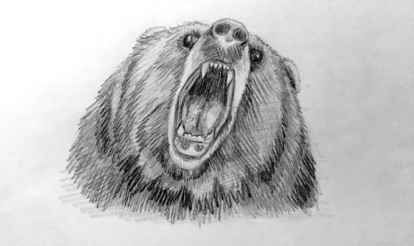 Как нарисовать медведя карандашом? Шаг 1. Поэтапный урок. Портреты карандашом - Fenlin.ru