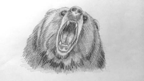 Как нарисовать медведя карандашом? Шаг 16. Портреты карандашом - Fenlin.ru