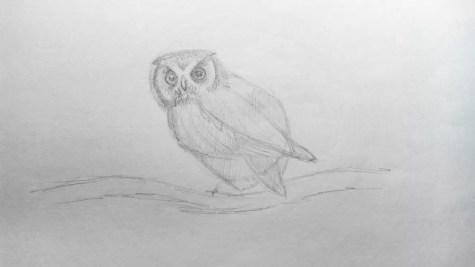 Как нарисовать сову карандашом? Шаг 11. Портреты карандашом - Fenlin.ru