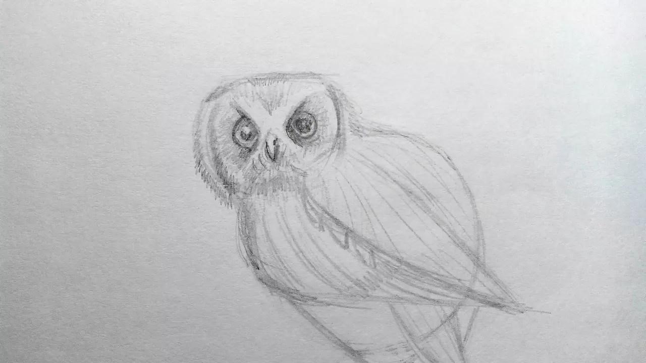 Как нарисовать сову карандашом? Шаг 8. Портреты карандашом - Fenlin.ru