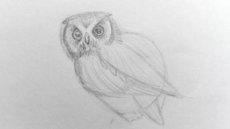 Как нарисовать сову карандашом? Шаг 9. Портреты карандашом - Fenlin.ru