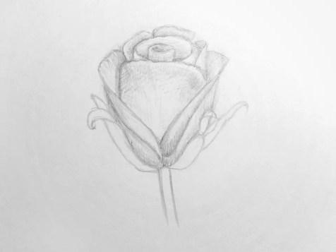 Как нарисовать розу карандашом для детей? Шаг 13. Портреты карандашом - Fenlin.ru