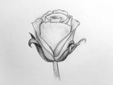 Как нарисовать розу карандашом для детей? Шаг 15. Портреты карандашом - Fenlin.ru