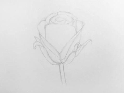 Как нарисовать розу карандашом для детей? Шаг 8. Портреты карандашом - Fenlin.ru