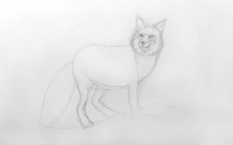 Как нарисовать лису карандашом для детей. Шаг 6. Портреты карандашом - Fenlin.ru