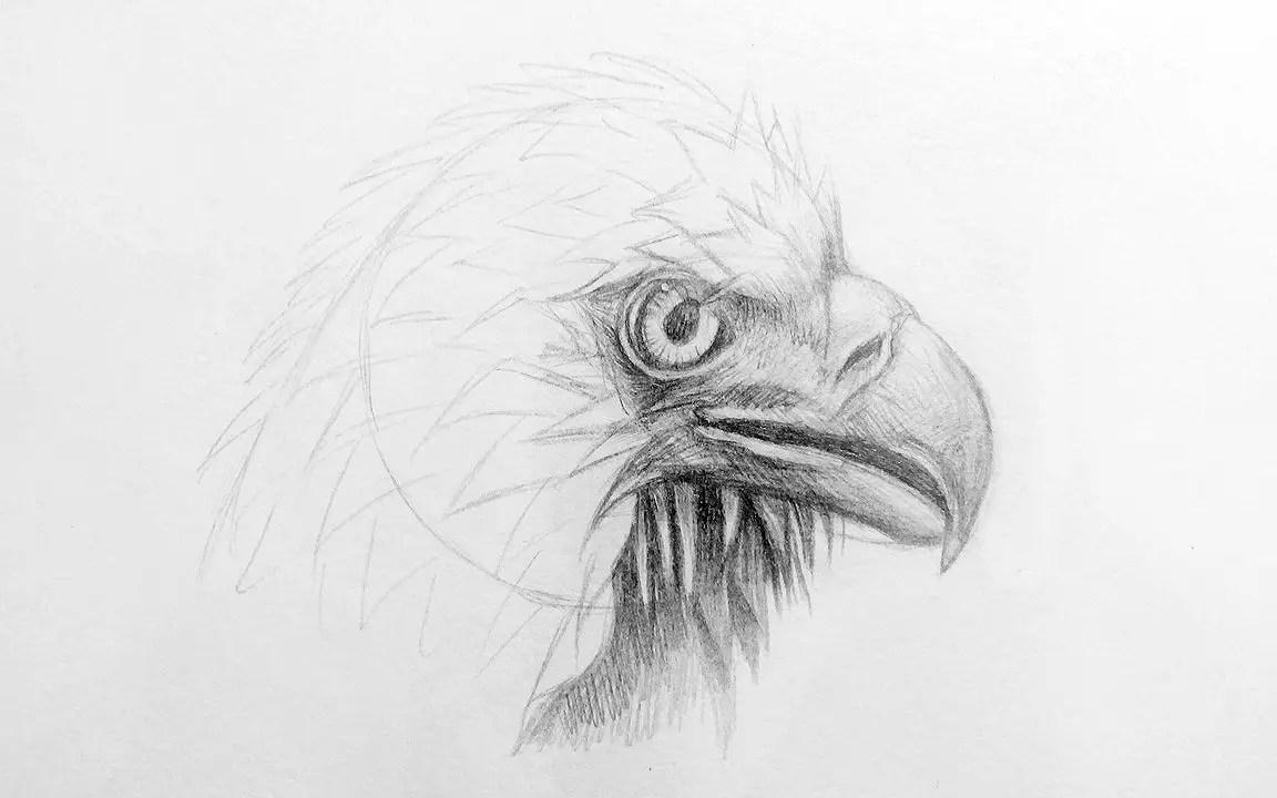 Как нарисовать орла карандашом? Шаг 12. Портреты карандашом - Fenlin.ru