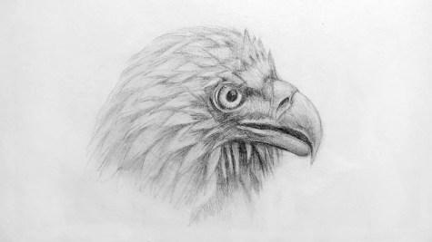 Как нарисовать орла карандашом? Шаг 16. Портреты карандашом - Fenlin.ru