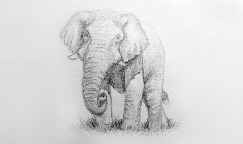 Как нарисовать слона карандашом? Портреты карандашом - Fenlin.ru