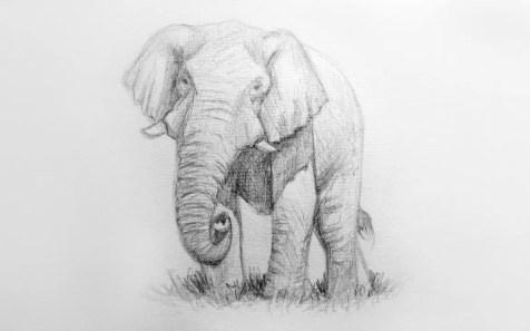 Как нарисовать слона карандашом? Шаг 11. Портреты карандашом - Fenlin.ru