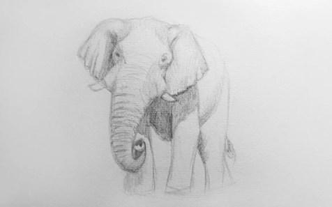 Как нарисовать слона карандашом? Шаг 8. Портреты карандашом - Fenlin.ru