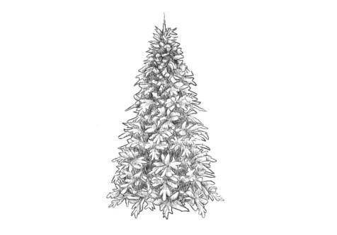 Как нарисовать елку? Шаг 9. Портреты карандашом - Fenlin.ru