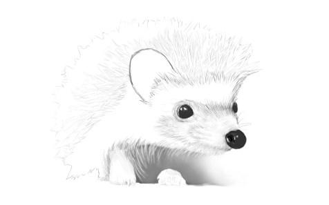 Как нарисовать ежика карандашом? Шаг 11. Портреты карандашом - Fenlin.ru