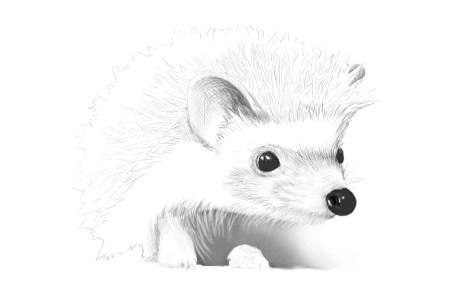 Как нарисовать ежика карандашом? Шаг 12. Портреты карандашом - Fenlin.ru