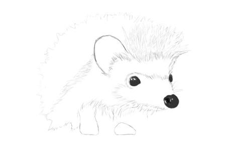 Как нарисовать ежика карандашом? Шаг 8. Портреты карандашом - Fenlin.ru
