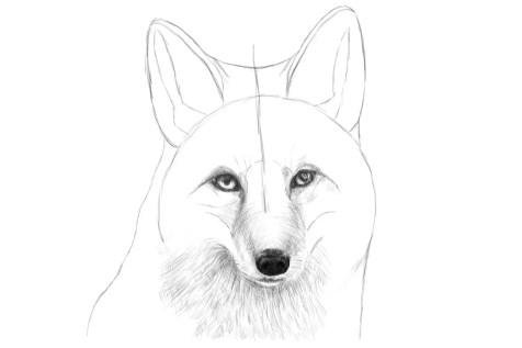 Как нарисовать лису на графическом планшете? Шаг 13. Портреты карандашом - Fenlin.ru