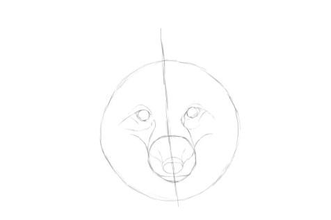Как нарисовать лису на графическом планшете? Шаг 5. Портреты карандашом - Fenlin.ru