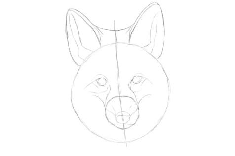Как нарисовать лису на графическом планшете? Шаг 7. Портреты карандашом - Fenlin.ru