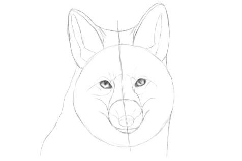 Как нарисовать лису на графическом планшете? Шаг 9. Портреты карандашом - Fenlin.ru