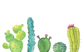 Painted illustration of Cacti