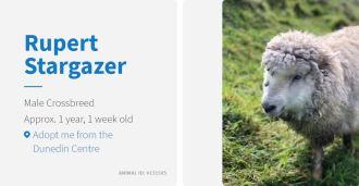 rupert stargazer the sheep spca