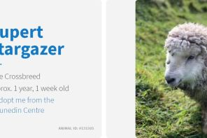 rupert stargazer the sheep spca