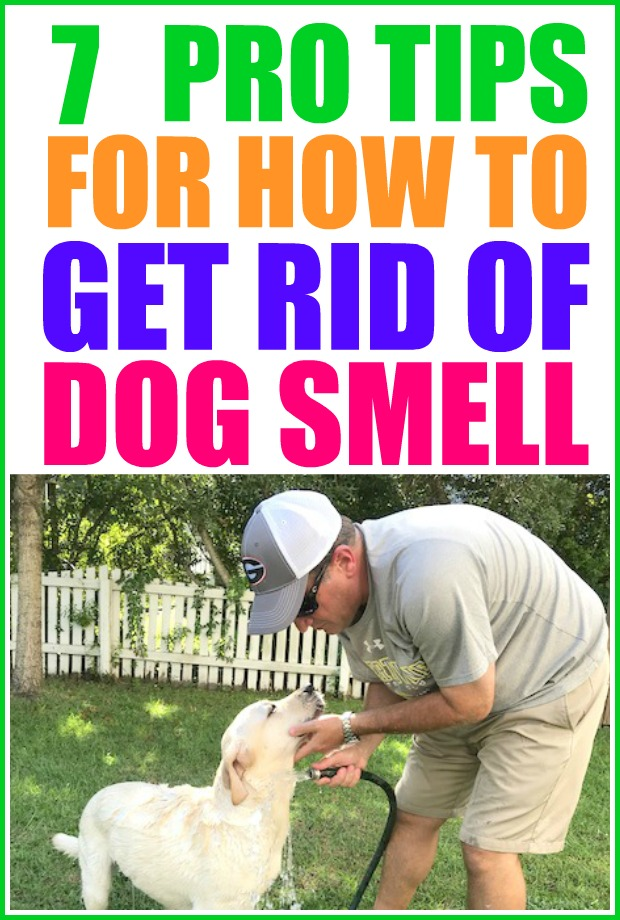 How to get rid of dog smell in your home. | pet smell neutralizer | dog smell | pet smell |