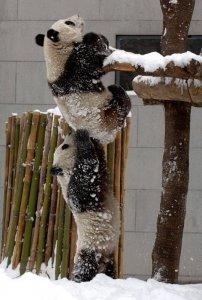 pandák fenntarthato.cafeblog