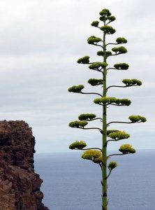 ültess fát fenntarthato.cafeblog