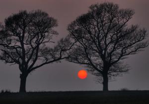 dva drveta