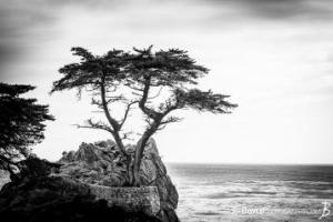 201312017-1600-monterey-ca-lonely-cypress-17-mile-drive-bw-1386633342